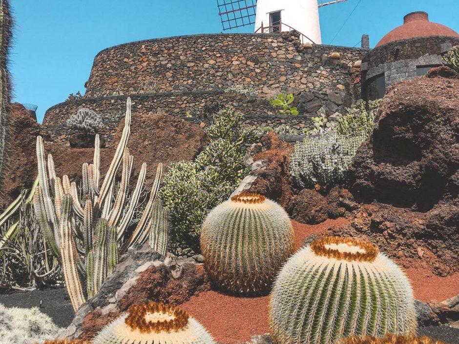 Cosa vedere a Lanzarote Jardin de Cactus
